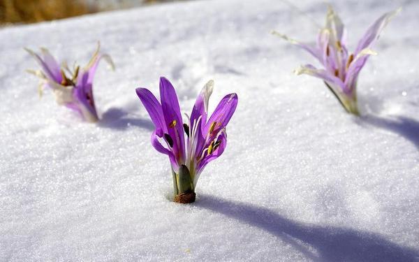 la-llegada-del-frio-activa-la-floracion