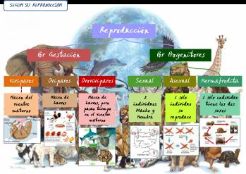 Clasificación de los Animales según su Reproducción
