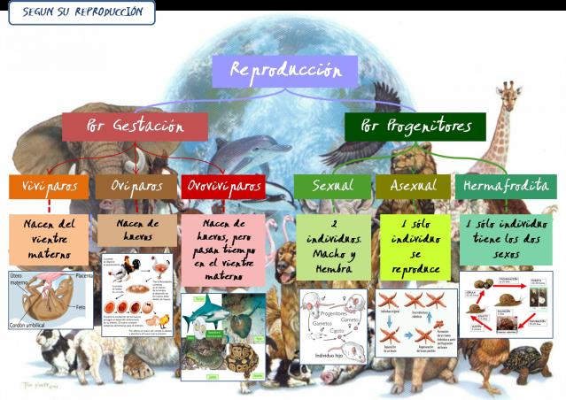 Clasificación De Los Animales Por Su Reproducción Sendero Vivo
