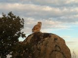 Vigilante en lo alto de la atalaya