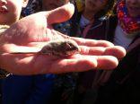 Hemos encontrado un lirón careto bebé!