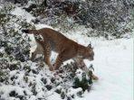 Explorando en la nieve
